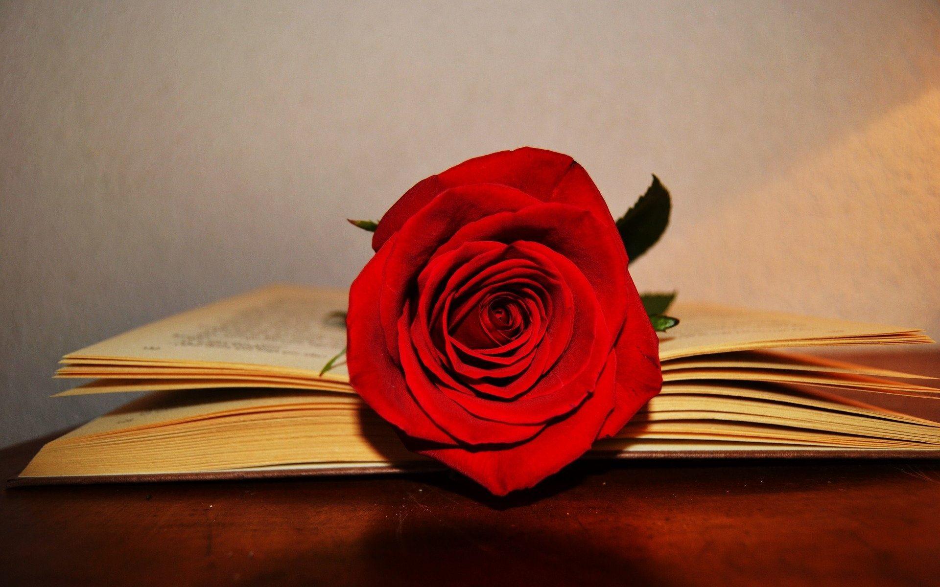 Libro y rosa por Sant Jordi